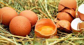 Cholesterol z jaj już nie straszy